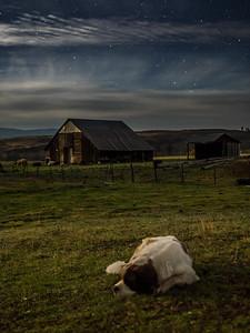 Dog Sleeping in Moonlight