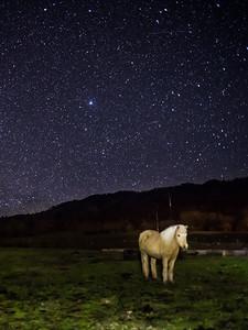 Horse Under Stars