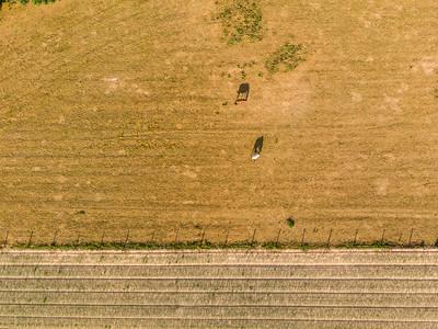Geertskouter (veld paarden)