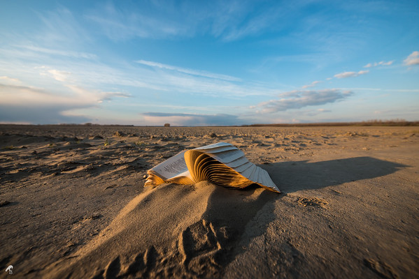 A Forgotten Book in the Middle of Nowhere
