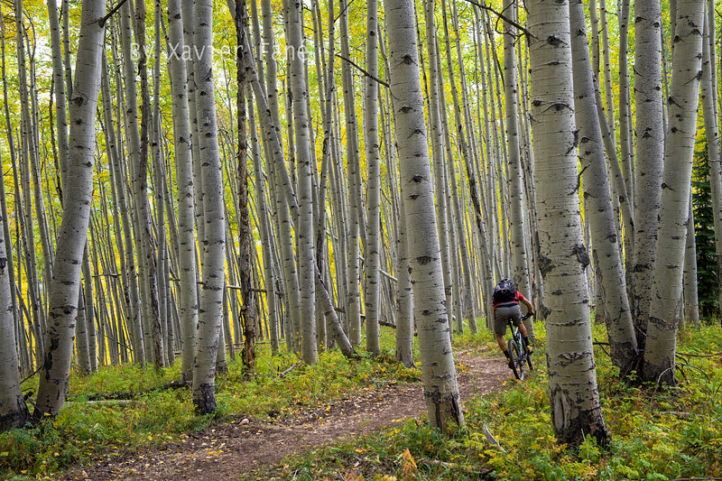 "The classic ""riding through a stand of aspens"""