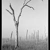 Foggy Morning, Cradle Creek Preserve
