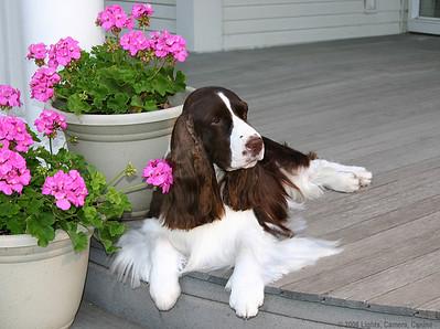 Charlie as a decorative porch accent