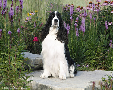 Apollo at the flower garden