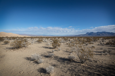 Near Kelso Dunes, Mojave National Preserve