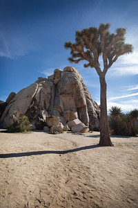 Ryan Campground, Joshua Tree National Park