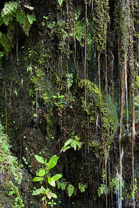 Water dripping down a rock wall, Maui, Hawaii
