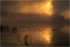 Adirondacks Forked Lake July 2015 Morning Mist Sunrise 13