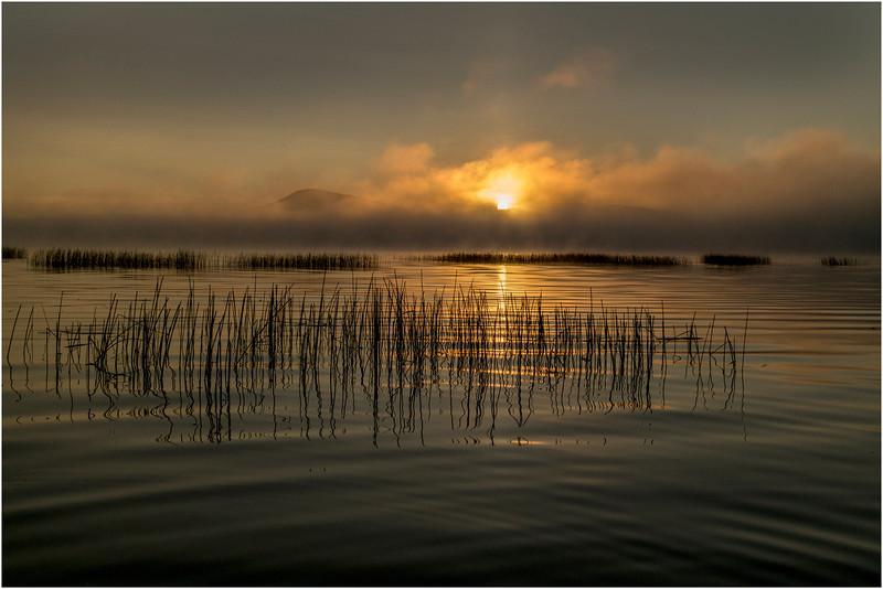 Adirondacks Little Tupper Lake Mist Sunrise and Wild Rice 5 September 2013