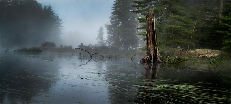 Adirondacks Bog River Morning Mist Stump Tree Grasses August 2013
