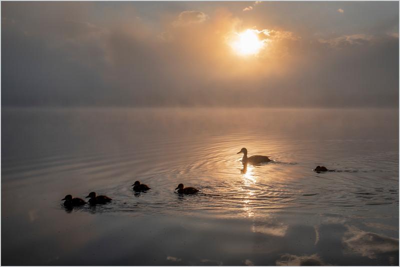 Adirondacks Rollins Pond Morning Mist 23 July 2019
