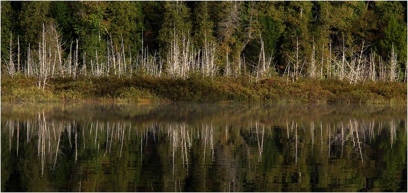 Adirondacks Henderson Lake September 2010 Mist Shore Dead Trees