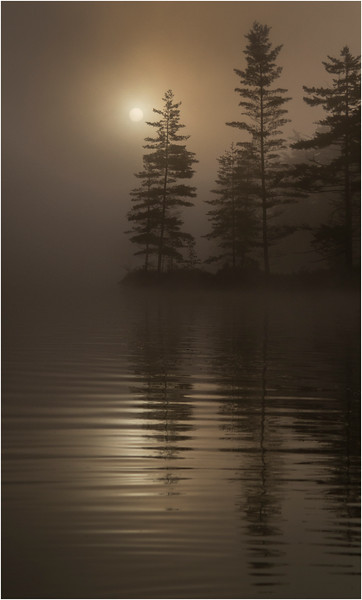Adirondacks Bog River Mist Sunrise Vertical August 2013
