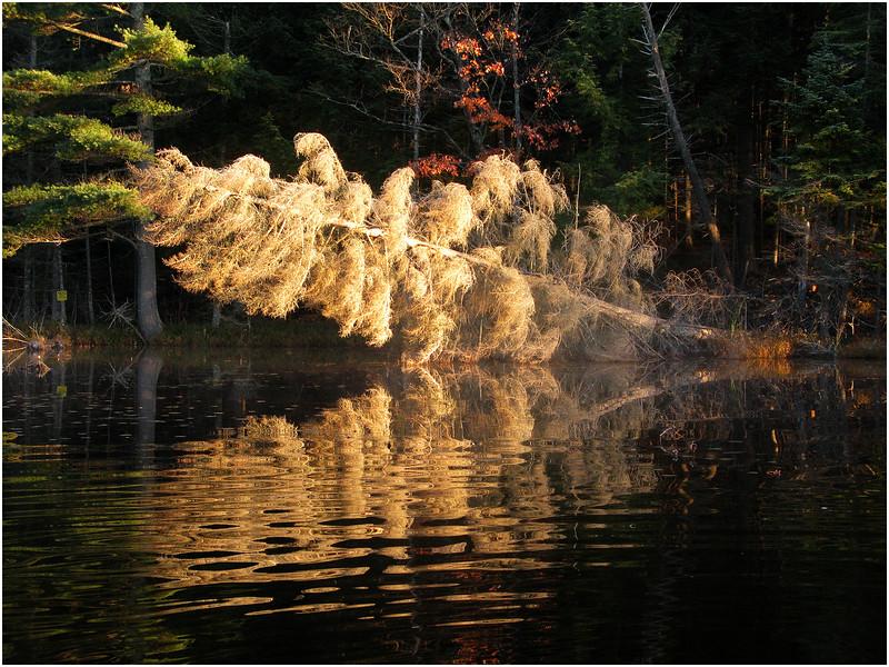 Adirondacks Utowana Lake October 2009 Mist Frost Tree