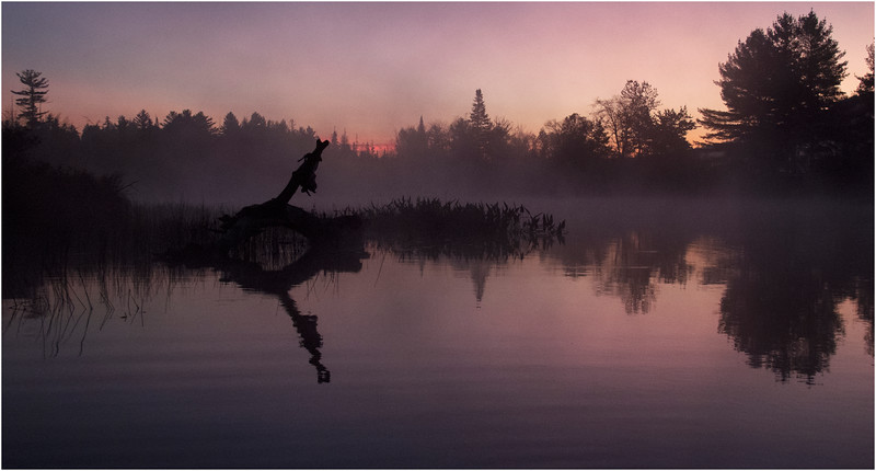Adirondacks Whitney Wilderness Round Lake Deadfall at Sunrise in Lifting Mist 4 October 2011