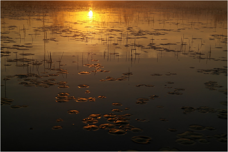 Adirondacks Whitney Wilderness Round Lake Sunrise Lilypads July 2012