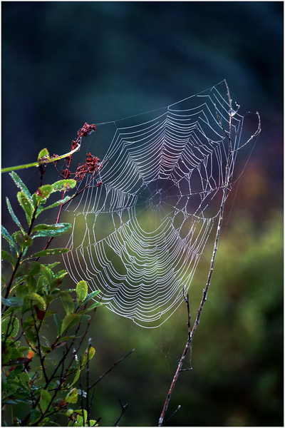 Adirondacks Forked Lake Spider Web 1 August 2016