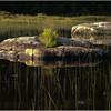 Adirondacks Cedar River Flow Shoreline Reeds and Rocks August 2009