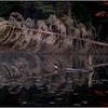 Adirondacks Utowana Lake  Reflection with Dead Spruce October 2009
