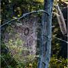Adirondacks St  Regis Little Pink Pond Spider Web 3 July 2009