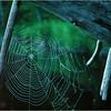 Adirondacks Classic Forked Lake Web on Log circa 1981
