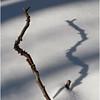 Snow Twig Shadow Vertical Upper Sergeant Pond February 2010