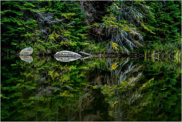 Adirondacks Cedar River Flow September 2015  Shoreline 19