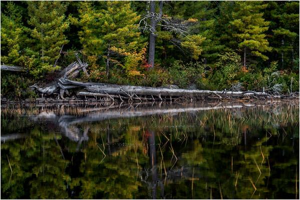 Adirondacks Whitney Wilderness Round Lake Shoreline 2 September 2013