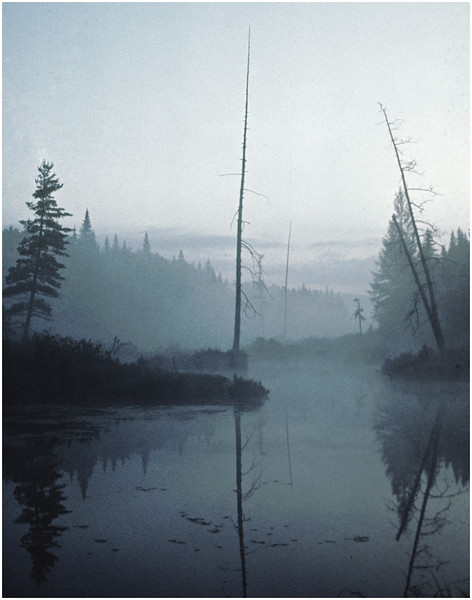 Adirondacks Classic Forked Lake Guardian Trees