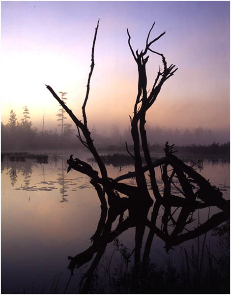 Adirondacks Classic Large Format circa 1996 Lake Lila Deadfall