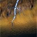 45 Adirondacks Tupper Lake Birch Branch and Reflections October 2001