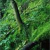 Adirondacks Classics Forked Lake Shore of Brandreth Inlet 4x5 circa 1996