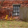 Albany NY Elizabeth Street Brock Wood and Flowers October 2008