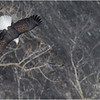 New York Cohoes Falls Eagle 7 February 2021