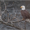 New York Cohoes Falls Overlook Eagle 20 December 2020