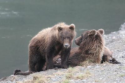 Alaska Safari (2006)