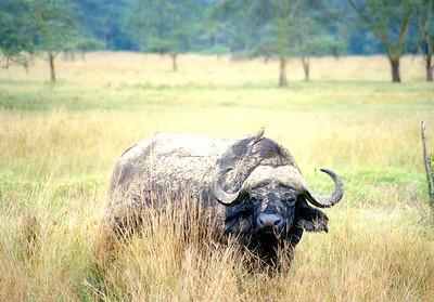 Wildlife Photography - General