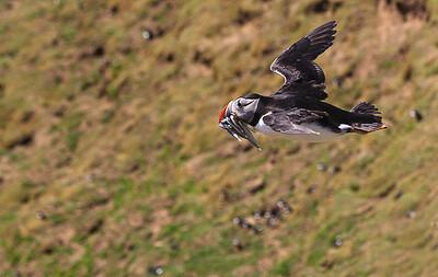 Photographs of Wildlife by Pradip Kotecha