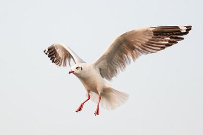 Wildlife Photographer Pradip Kotecha