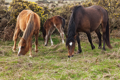 A Family of Horses