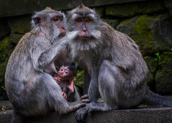 family life ii   bali, indonesia