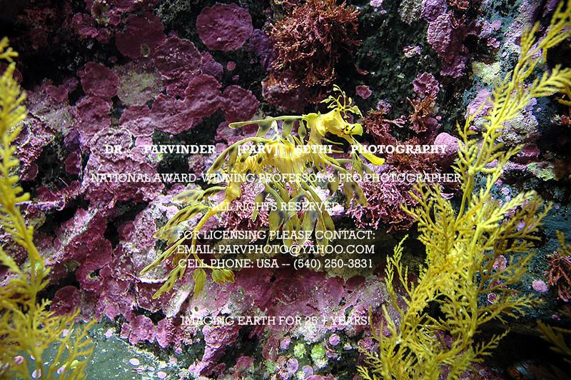 Oceanography_017