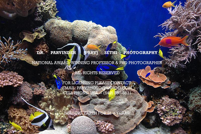 Oceanography_013