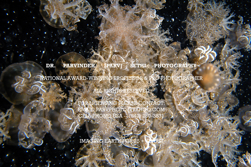 Oceanography_010