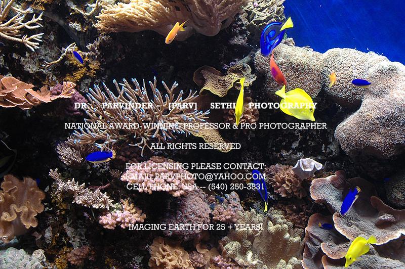 Oceanography_016