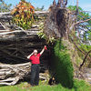 It is hard to understand the size of this tree until standing next to the fallen tree.