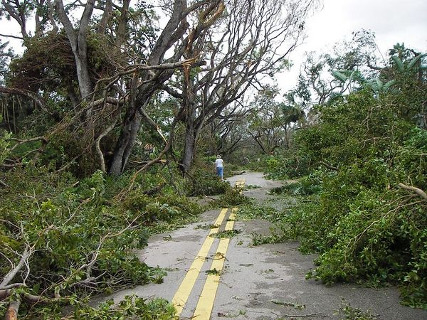 """This image was taken from the same location as the """"before"""" image. This was taken at 3:15pm October 24, 2005 several hours after Hurricane WILMA passed over Boca Raton, FL. This view is of NW4th Street from NW9th Avenue looking due east."""