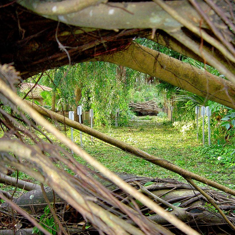 aaa Hurricane Frances - View of the tree damage 36 hours after the storm - Boca Raton Palm Beach County Florida