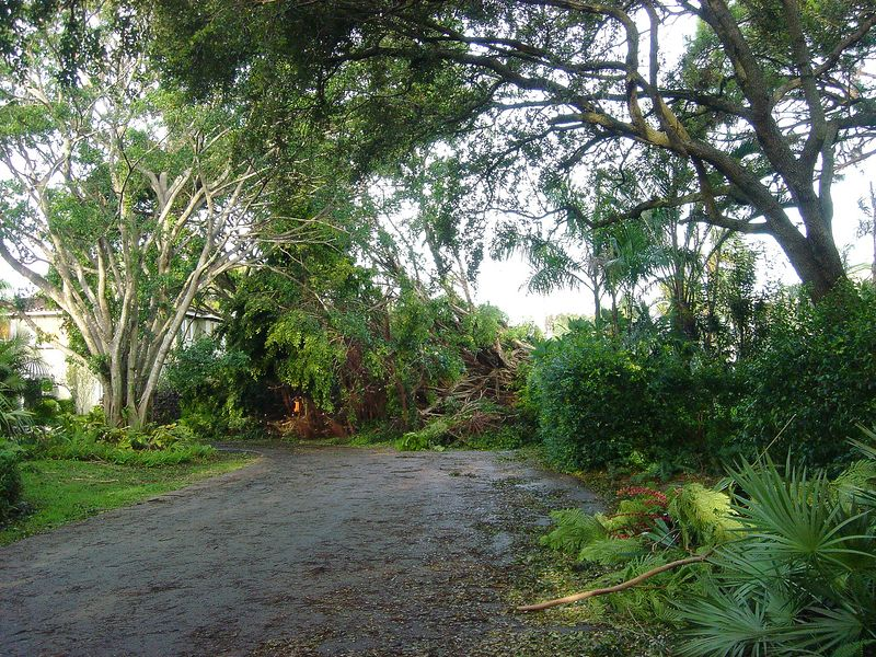 k Hurricane Frances - View of the tree damage 36 hours after the storm - Boca Raton Palm Beach County Florida