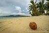 Coconut on tropical island beach